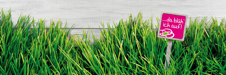 Grasfläche vor grauen Holz mit Sagaflor-Schild