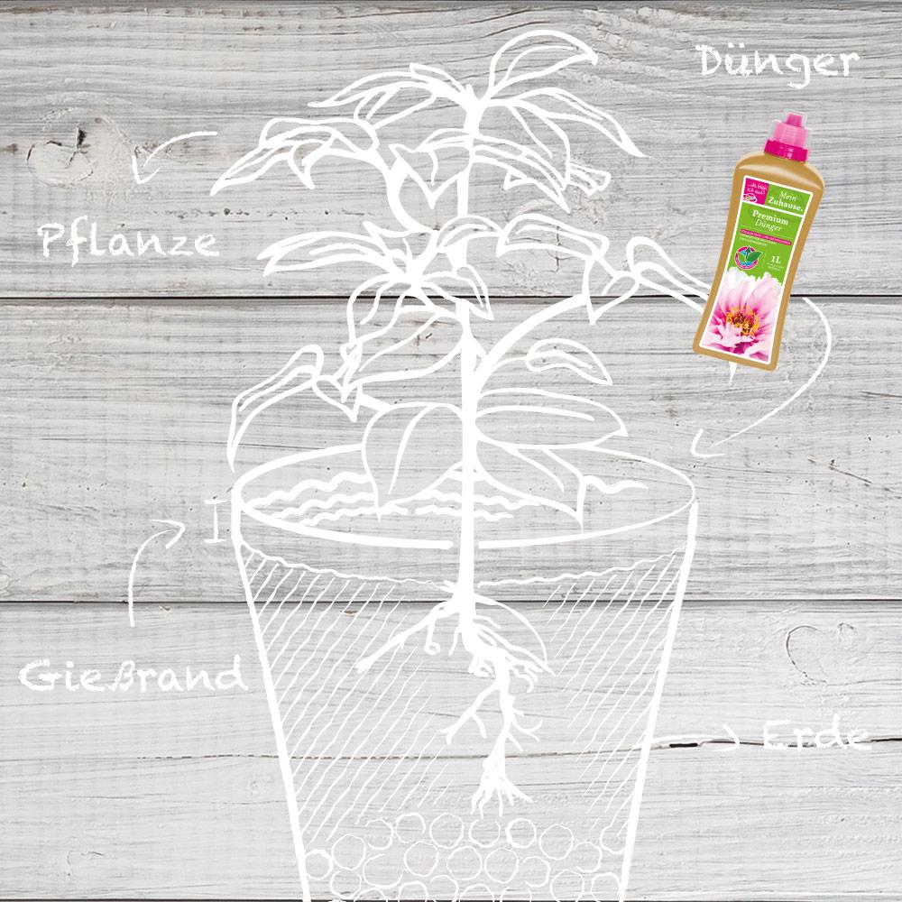 Illustrierter Top auf Holz-Hintergrund mit Produkt