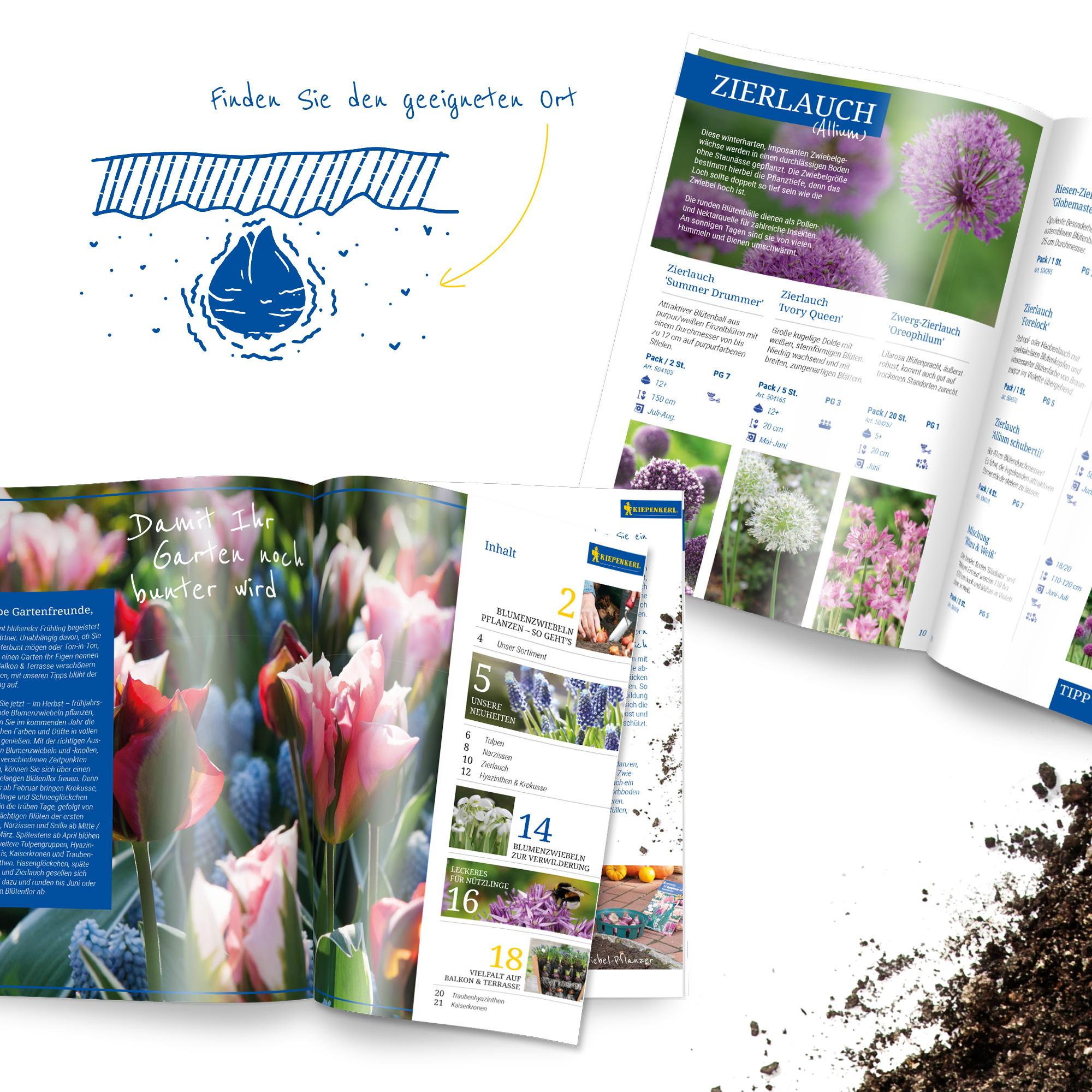 Einleitung und Illustrationen in der Kiepenkerl Blumenzwiebelbroschüre